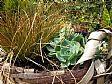 Punica Peyzaj Bitki Satışı