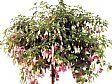 Punica Peyzaj - Bahçe Bakımı