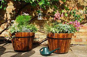 Punica Peyzaj - Saksı bahçeciliği. Saksı aranjmanları