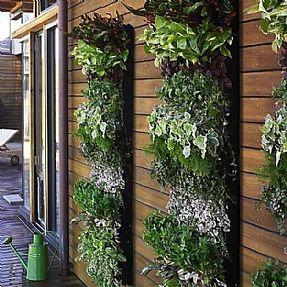 Punica Peyzaj - Dikey Bahçecilik