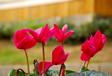 Punica Peyzaj - Bahçe Tasarımı